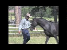 Amazing Horses with Jonathan Field