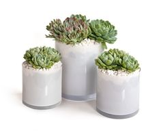 3 Simple DIY Wedding Centerpieces: Luscious Succulents | OneWed