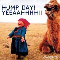 Hump day humor!
