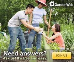 Plate flowers - Garden Junk Forum - GardenWeb