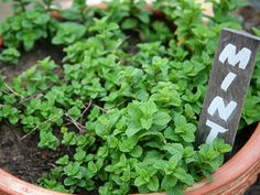 4 Totally Foolproof Edibles to Grow This Spring
