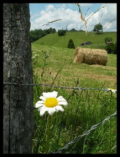 barb wire fence...hayfield <3