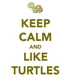 keep calm and like turtles