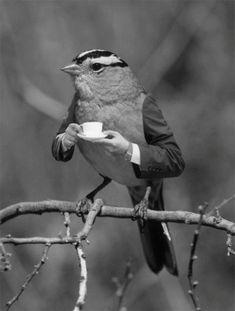 Source: weresuper tea time, cups, funni, teas, morning coffee, cup of coffee, mornings, birds, early bird
