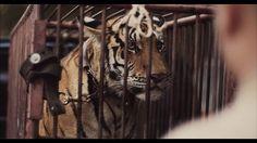 Rudimental – Right Here - Josh Cole a réalisé ce beau clip pour Rudimental et le morceau « Right Here ». Produite par Rokkit, cette vidéo proche du court-métrage propose de suivre en Thaïlande le combat d'un homme pour protéger un tigre de brigands malveillants. A découvrir dans la suite de l'article.