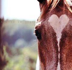 anim, horses, heart shape, beauti, hors heart, equestrian, countri, thing, equin