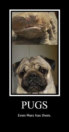 thing pug, space pug