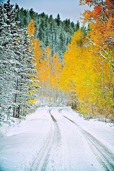 Snowy Back Road in Winter