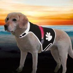 Die leuchtende Sicherheitsweste für den großen #Hund. Tolles Teil #Sisko ist begeistert!