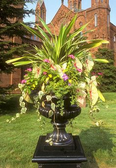 A variety of heights, colors, and textures in this Enid A. Haupt Garden urn make for an exciting container garden.