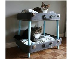 Vintage suitcase repurposed into pet cat bunk beds, add legs; upcycle, recycle, salvage, diy, repurpose!  For ideas and goods shop at Estate ReSale & ReDesign, Bonita Springs, FL