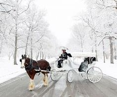 Enjoy a horse drawn carriage ride~!