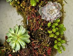 how to make a living wreath