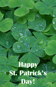 St. Patrick's Day is all about leprechauns, green beer and four-leaf clovers.  But in the world of gardening, clover can take over.  Flame Engineering offers an organic way to keep clover under control!