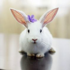 bunny and flower @ Judith Land