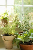 Growing French Kitchen Herbs