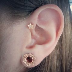 Stretched ear adorned with Tawapa lotus eyelets in gold and Anatometal plumeria end in the cartilage