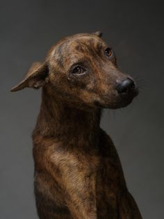 shelter dogs, animal shelters, memento mori, animal rights, nature, national geographic, pet, highlight, eye