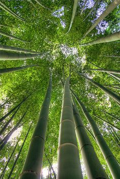 Looks like the bamboo forest in Hana, Maui.