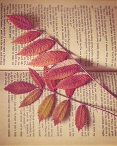 Autumn Reading  8 x 10 Fine Art Photograph by jessicatorres on Etsy.