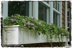 windowbox, front porches, window boxes
