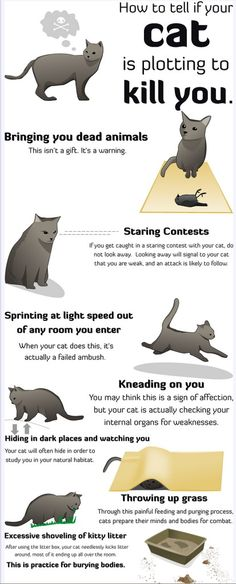 How to tell if your cat is plotting to kill you - Note to self -sleep with one eye open!