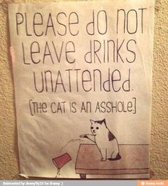 Haha the cat is an asshole
