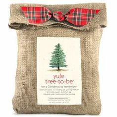 Yule Tree-To-Be