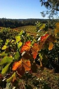 Boeger Winery ~ Placerville, CA