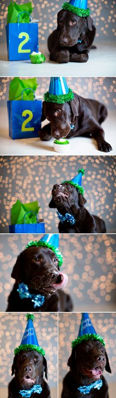 doggie birthday photo session PRECIOUS!