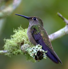 Invite Hummingbirds in your yard by feeding them and they're your friends for life. Love Hummingbirds, they're so pretty!!