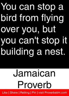 bird, proverb quot