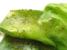 Celery Seed Vinaigrette