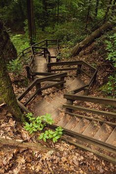 Adventuring | Red River Gorge