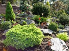 Natural Landscaping Ideas - Full Sun Landscaping Ideas
