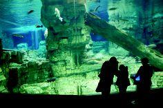 Aquarium at Discovery World  #WhyHB