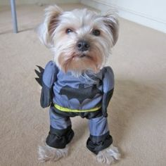 Alfie Couture Pet Apparel - Superhero Costume Batman - Size: M $13.99
