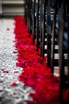 Red Pedals lining the aisle