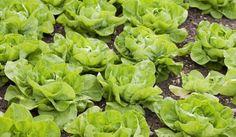 Start your own kitchen garden! #DIY