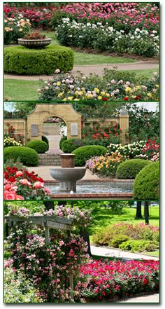 Tyler Rose Gardens....beautiful!         Tyler, Texas