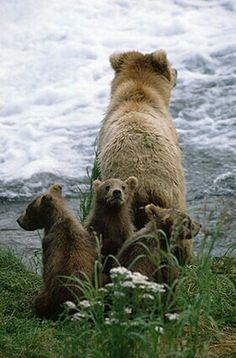 Kodiak bear sow with her three cubs