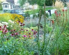 suburban front yard rain garden, with neighbors' lawns in the background.  photo from Beautiful No-Mow Yards by Evelyn Hadden.