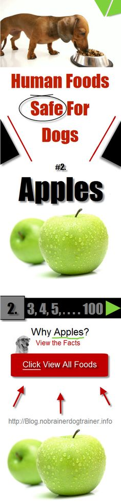 Apples are a part of Human Foods Safe For Dogs Diet. Apples offer both vitamin C and Vitamin A for your dog. They are a good source of fiber for a dog of any age.  Read More - and- Get the WHOLE list at: http://blog.nobrainersdogtrainer.info/human-foods-safe-for-dogs/