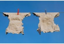 cloth nappies drying on clothesline