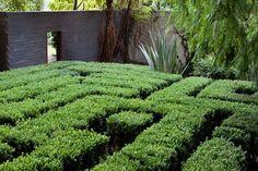 buxus maze
