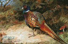 Pheasants cross stitch pattern.