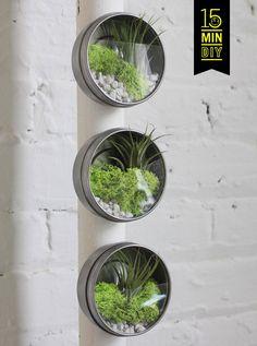 MY DIY | Mini Terrarium