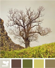 tree tone, color palettes, design seeds, nature, color schemes, earth tones, bedroom colors, trees, master bedrooms