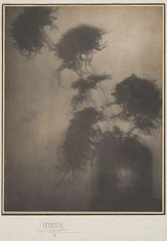 The Shadows on the Wall/Chrysanthemums – Adolf de Meyer (1868–1949)