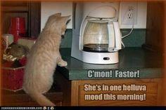 Morning coffee...